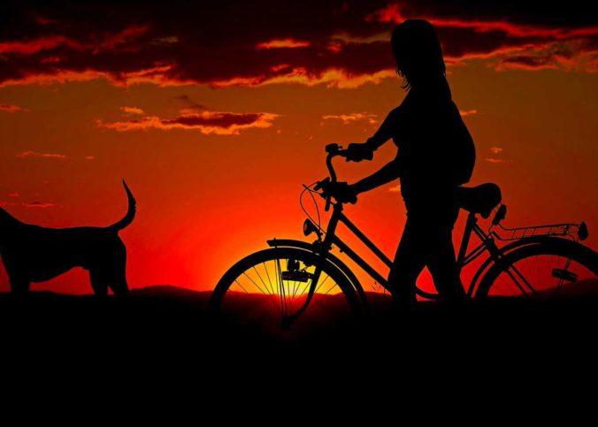 ohne Fahrradhalterung Hund